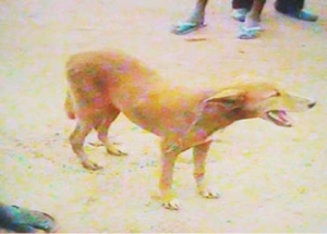 Edo command nabs man for sleeping with dog